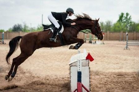 Всероссийские соревнования по конному спорту